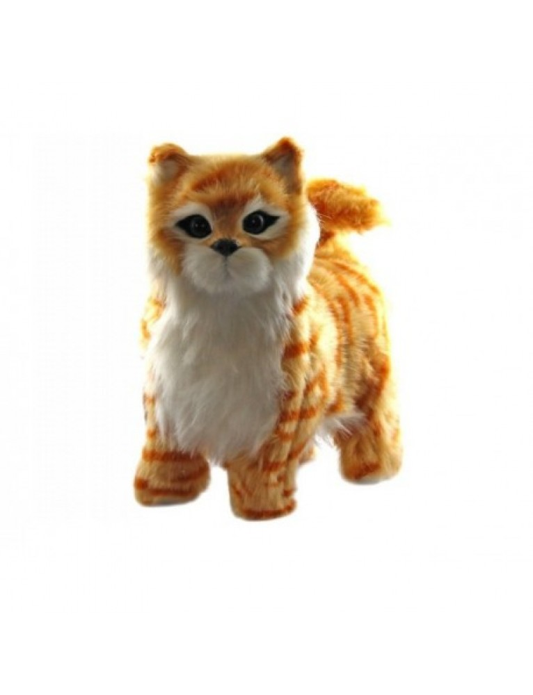 Hnedá mačička pics
